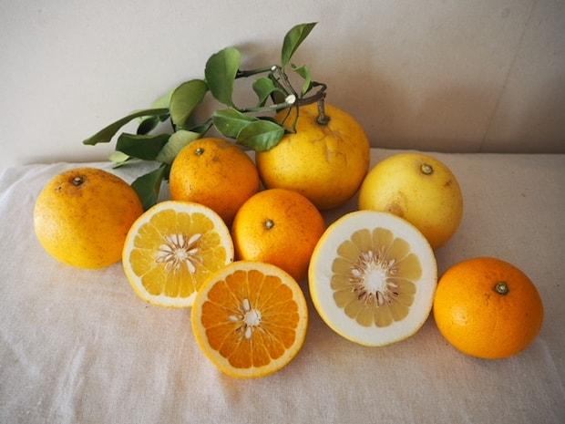 Citron et Citron の「柑橘」