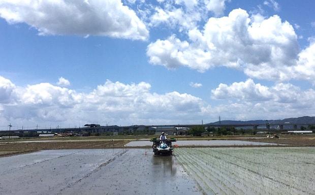 広々と広がる〈宮本ファーム 米とやさいの食工房〉の水田。ここで上質なお米が作られます。