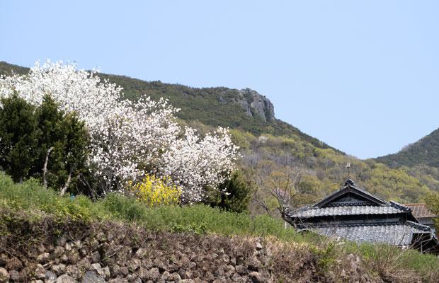 いつもと変わらない風景。この時期に白いきれいな花を咲かせる木とわが家。