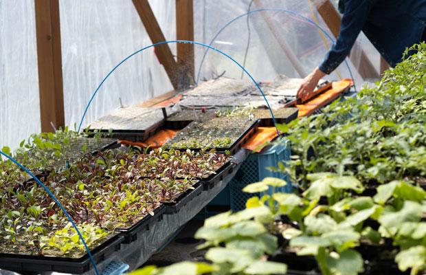 育苗ハウスでは、これから植える夏野菜の苗たちが元気。