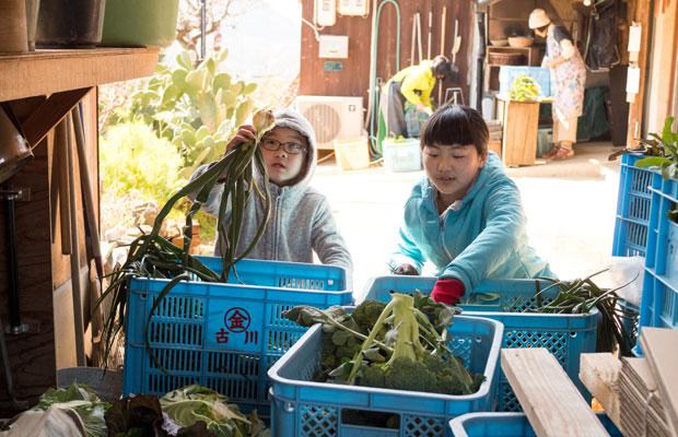 臨時休業中の子どもたち。野菜の出荷作業を手伝ってもらいました。