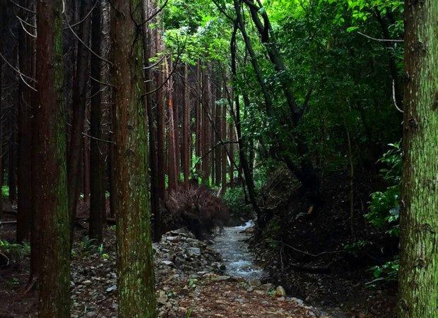 森の学校に流れる小川とリバーバンクの森。