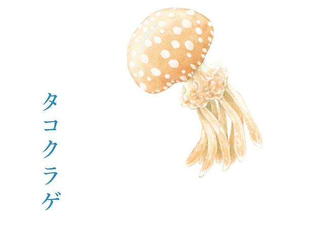 斑点が印象的なタコクラゲ