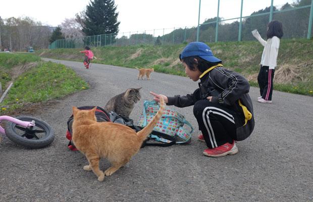 仕事場と家とを往復していると猫に出会う。3人と3匹は気が合うようだ。