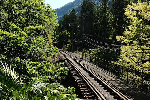 こちらは銘茶の産地中井侍駅。駅を降りて歩くと茶畑が広がっています。
