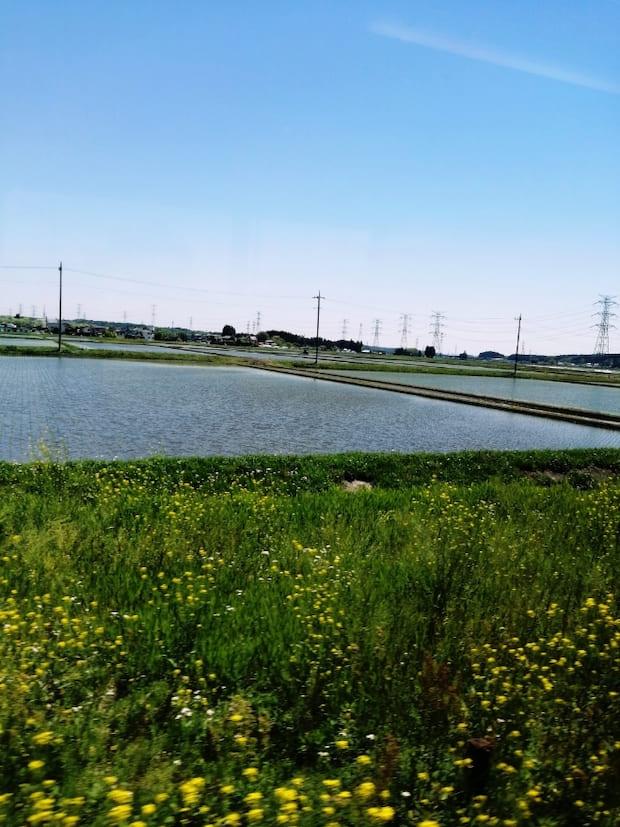 ゴールデンウィーク中に田植えが行われ、どの田んぼにも並々と水が張られております。