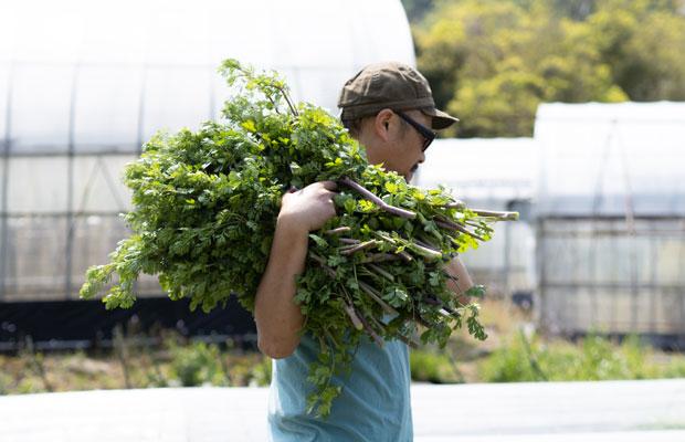 私たちは毎日粛々と野菜を育ててます。