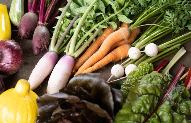 5月下旬に収穫できる野菜たち。旬野菜セットとしてダンボールに詰めて配送しています。