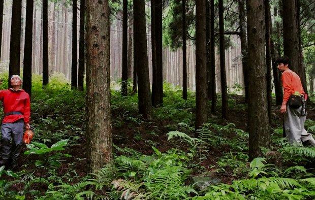 森の調査に入る。