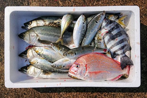 玄界灘の荒波で身が締まった魚たちがこれでもかとたっぷり詰まっている。ご近所でのシェアも◎。
