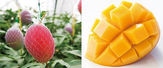 返礼品として選べる宮崎特産の完熟マンゴー。