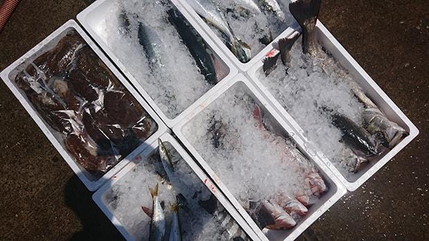 漁港には毎日さまざまな種類の魚が水あげされる。