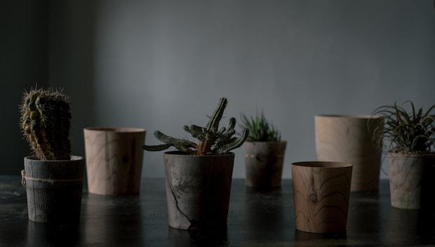 ろくろ舎オリジナル木製鉢植え「Timber pot」
