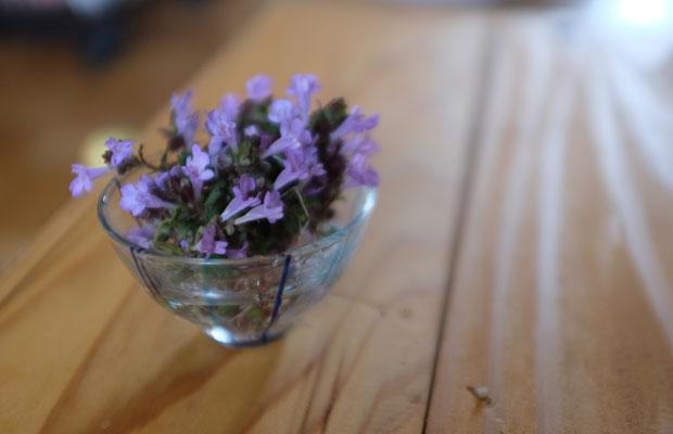 お茶にも挑戦。カキドオシという小さな花は、ちょっとシソのような風味があっておいしい。