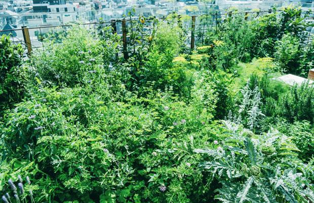 野菜やハーブ類が勢いよく生い茂り、青色も鮮やか。目線を遠くに移すと、渋谷のビル群が見える。