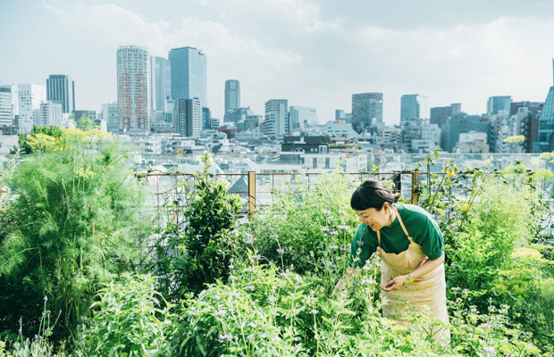 小さな農園越しにビルを望む、ここにしかないロケーション。