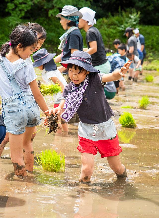 田植え作業中の子ども