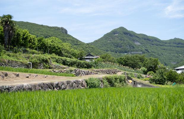 田んぼ越しに眺める我が家。山と田んぼの緑が美しい季節。