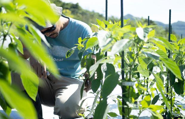 ピーマンの成長具合を確認。夏野菜たちがどんどん大きくなっていきます。