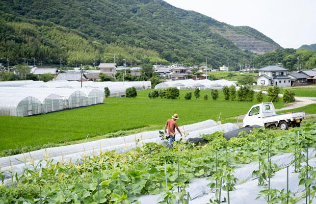 段々畑の上から撮影。段々畑って風景としては美しいけれど、管理するのはほんとに大変。