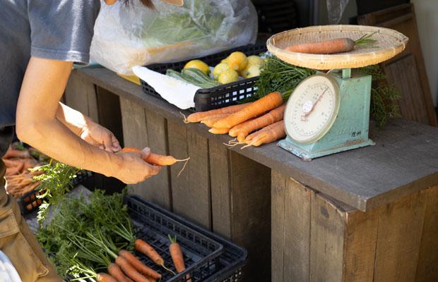 野菜の選別作業は思った以上に手間と時間がかかります。届いたときに喜んでもらえるように。