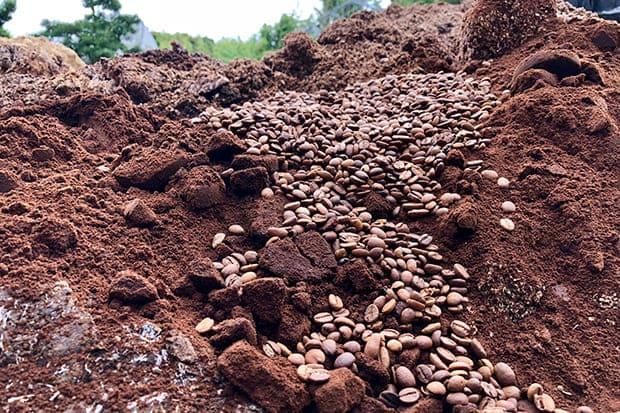 金澤バイオ研究所の工場に集められたコーヒーカスと焙煎ではじかれたコーヒー豆。