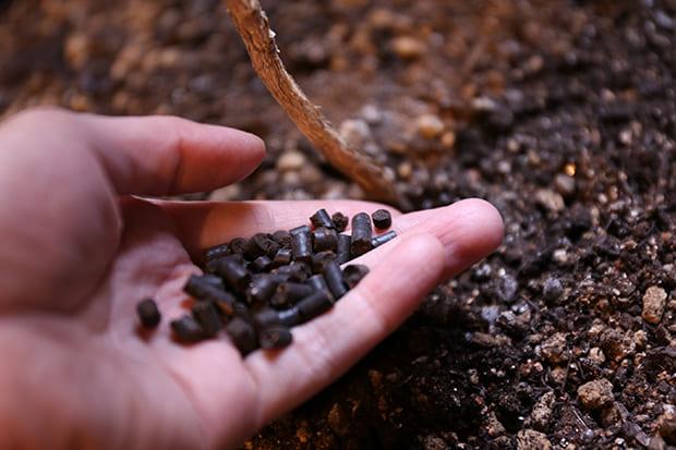 小粒状に固めたペレットは、施肥、散布するときに飛び散りが少なく室内の観葉植物などへの使用におすすめ。