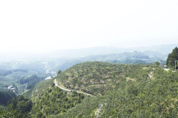 〈堀内果実園〉明治36年から奈良県・吉野山麓でくだものを専門に農園を営んでいる果実園。