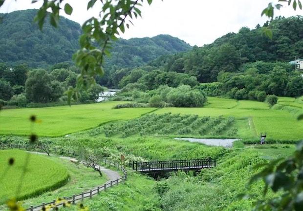 緑美しい金田一温泉郷の景色(画像:『ほんものにっぽんにのへ』ウェブサイト内動画より)。