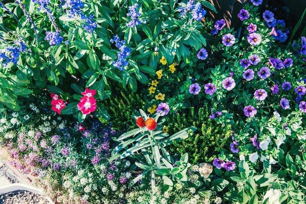 庭を彩る数十種の草花。「4人の子どもと同じくらい愛情を注いでいる」と友恵さん。