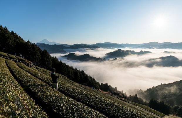 絶好の条件が重なると、左手に富士山、眼下に雲海が見える。(写真提供:豊好園)