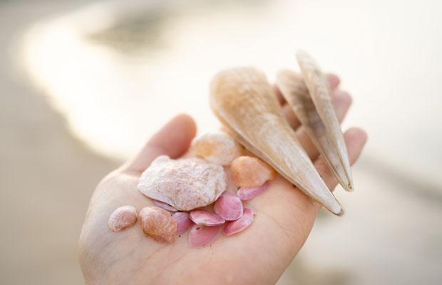 きれいな貝殻を拾える海岸もあります。