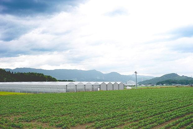 きゅうり農家〈グリーン ベース〉のハウス。手前はフェルマ木須の畑で大豆を育てている。