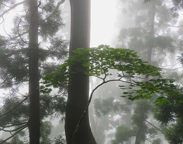 靄がかった山中の風景