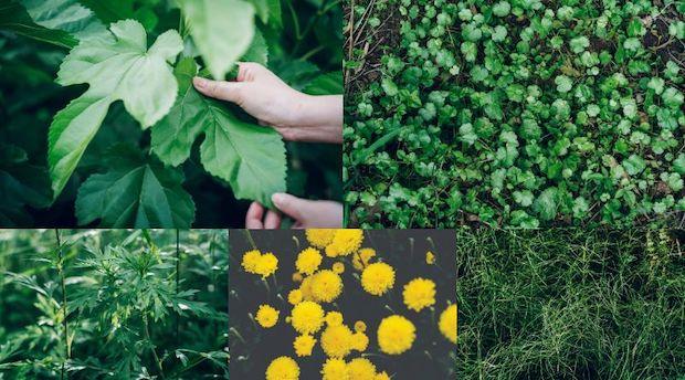 花と葉 葉にふれる人の手