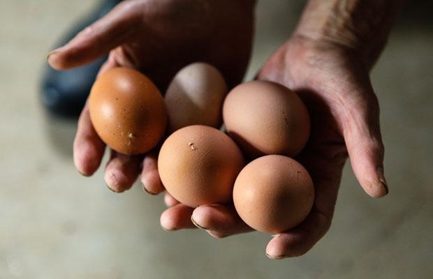 比内地鶏の産みたての卵。