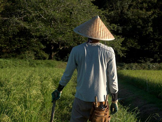 竹笠をかぶって田んぼ作業中