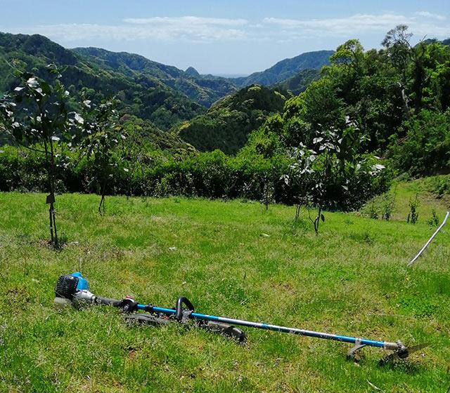 レモン農園で使用している草刈り機