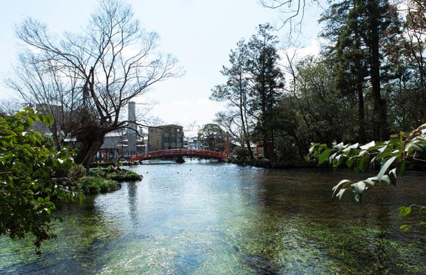 国指定特別天然記念物の湧玉池を〈掬水〉から望む。水面に触れるくらい、近い。(撮影:甲田和久)