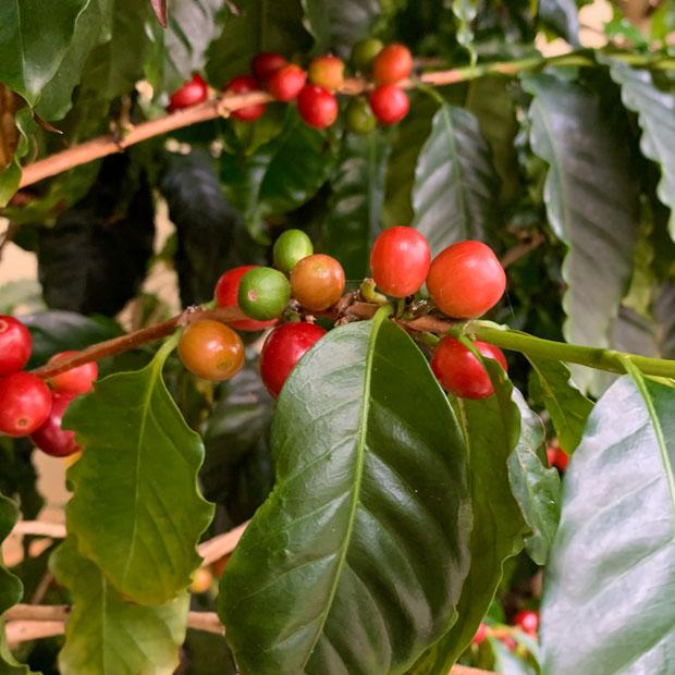 写真提供:にいがたコーヒープロジェクト
