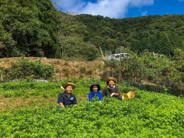 ぎふコーラのシロップは伊吹山で採れたよもぎ、かきどおし、どくだみ、ヤブニッケィの4種類を配合して作られる