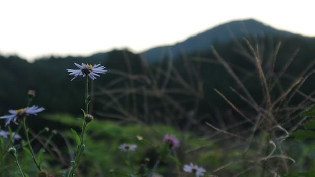 福島県広野町の里山風景