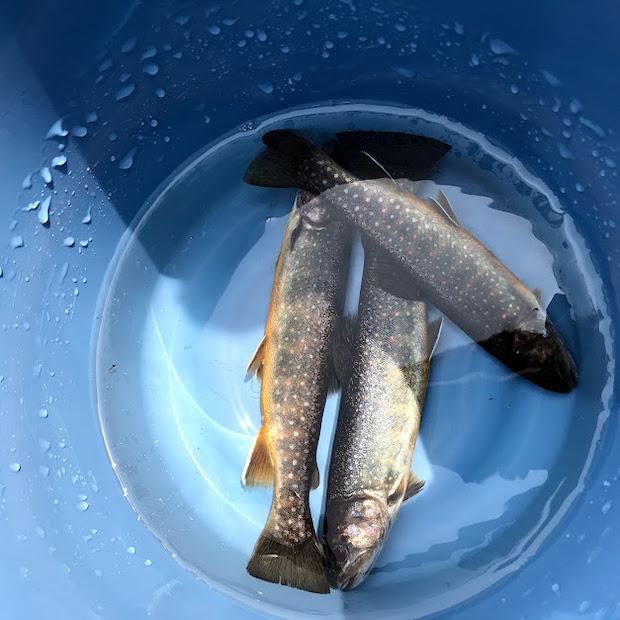 衣川ふるさと自然塾で体験できるイワナ釣り