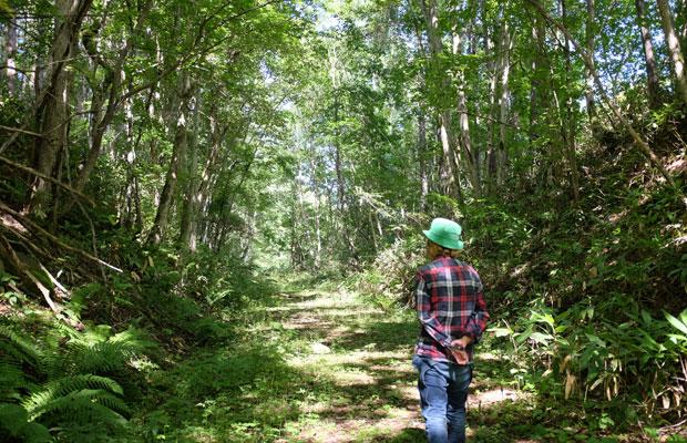 木々がアーチ状になった深い森。苔むした岩もあり空気がひんやりしている。