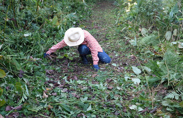 手で刈った草を脇によけていくMAYAさん。