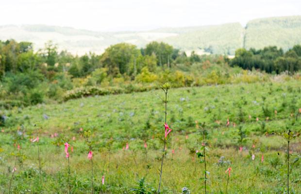 買った山にはカラマツ、ヤチダモ、ミズナラを植林した。(撮影:津留崎徹花)