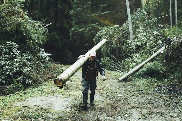 竹取りは、福岡の八女、熊本の菊水や和水に生えている天然の孟宗竹(もうそうちく)を切子が1本ずつ切り出していきます。竹林に定期的に人の手が入ることで、地域の生態系の保全にもひと役買っているそう。