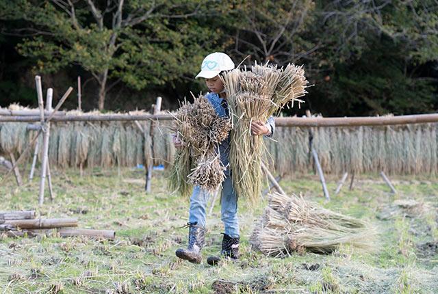 稲を運ぶ子ども