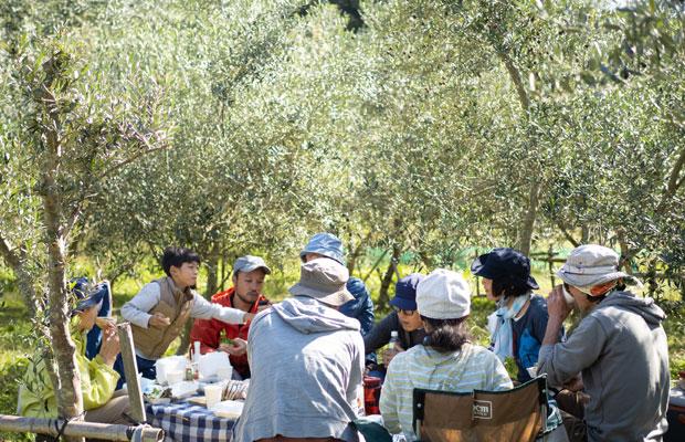 オリーブの樹の下でお昼休憩。