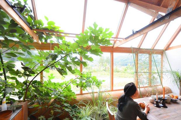 室内菜園には昨年まで苗木だったアボカドといちじくが生い茂る。植物に詳しいゲストからこの菜園や手つかずの庭についてアドバイスをもらったことも。